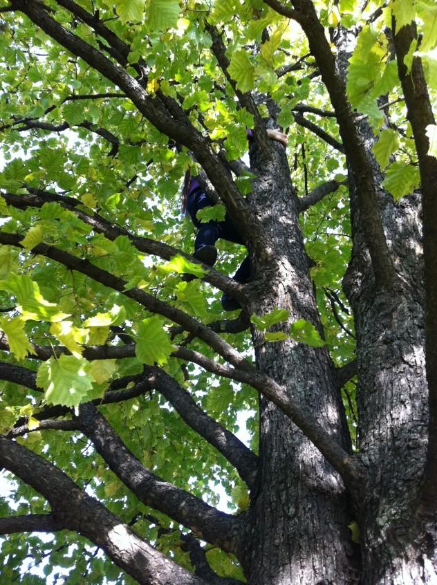 Gilda a fán1