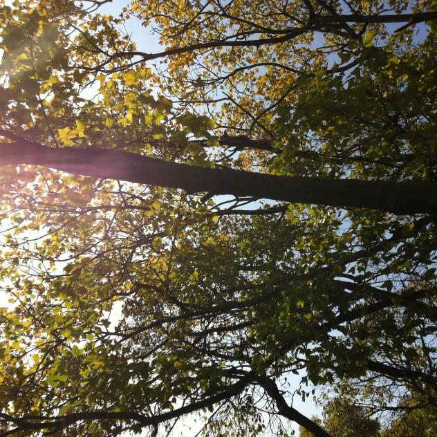 Mókus a fán